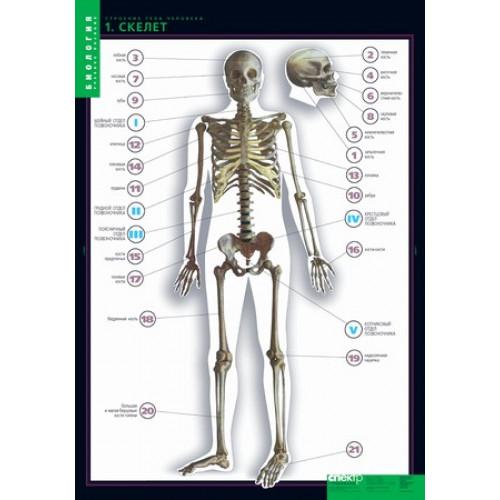 Комплект таблиц. Строение тела человека (10 таблиц+80 карт.)