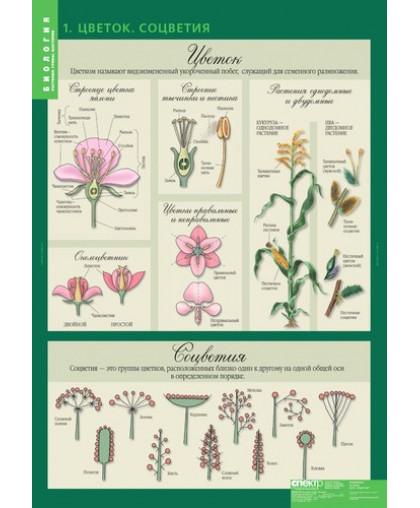 Комплект таблиц. Биология 6 класс. Растения, грибы, лишайники (14 таблиц)