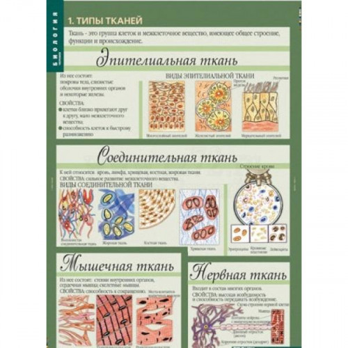 Комплект таблиц. Биология 10-11 классы. Цитология. Генетика. Селекция (12 таблиц)
