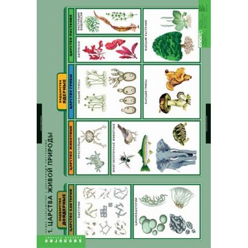 Комплект таблиц. Общее знакомство с цветковыми растениями (6 таблиц)