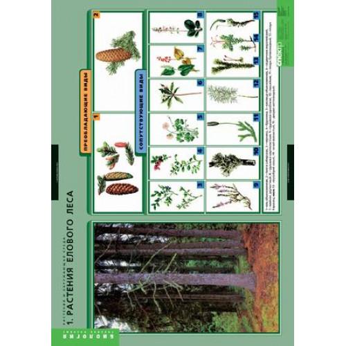 Комплект таблиц. Растения и окружающая среда (7 таблиц)