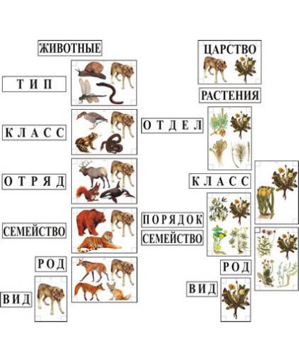 """Модель-аппликация """"Классификация растений и животных"""""""