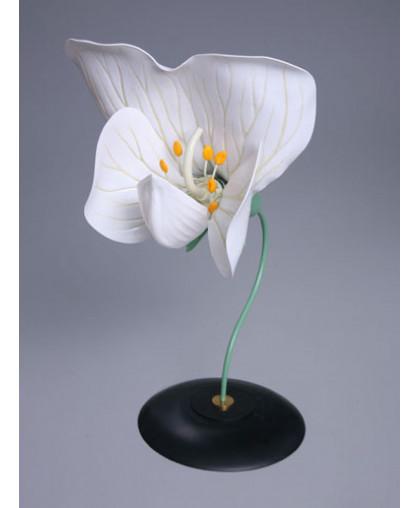 Модель цветка гороха, МОДЕЛИ ОБЪЕМНЫЕ купить