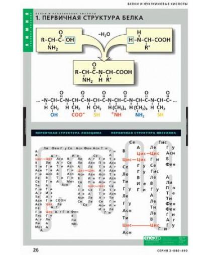 Комплект таблиц. Белки и нуклеиновые кислоты (8 таблиц)